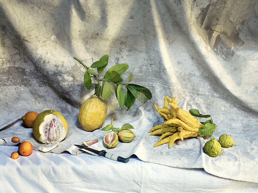 food stylist in Berkeley - citrus still life lemon varieties Bitter Cookbook - James Beard Award by Jennifer McLagan photographed by Aya Bracket photographer