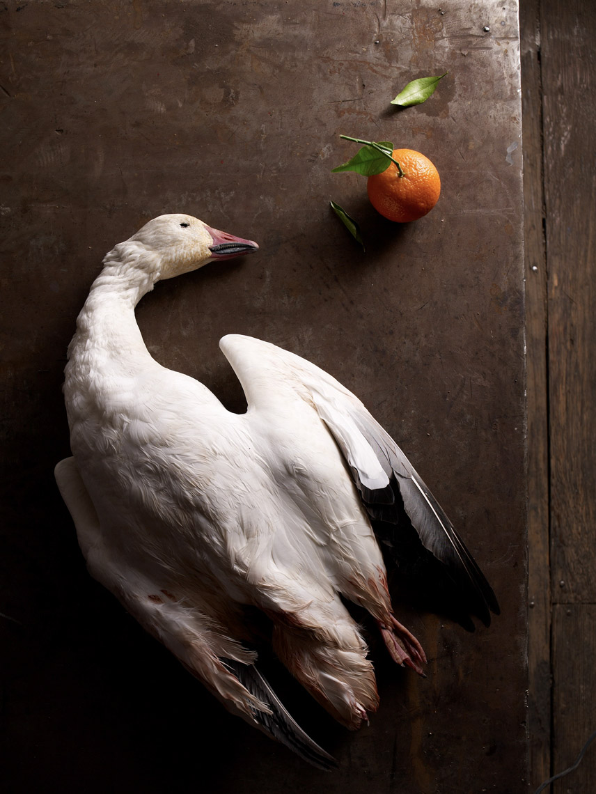 food stylist in San Francisco - Goose with clementine still life for Angelo